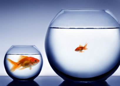 What would you be- The Big Fish in a Small Pond or a Small Fish in the Big Pond?