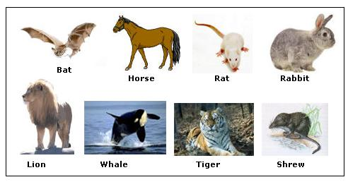 Mammalia Examples