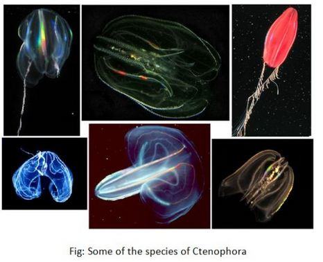 Be The First To Read About Ctenophores Aschelminthes