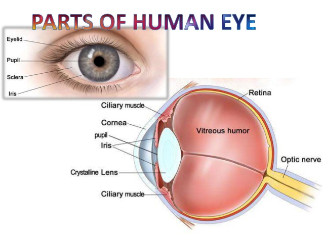 The Fine Tuned Design Human Eye AskIITians Blog One Place For - Human eye
