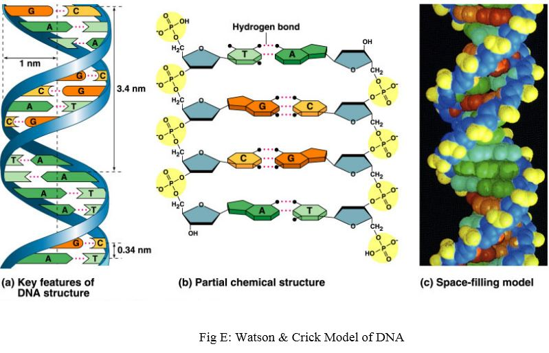 Found in both DNA and RNA, a reading frame is a sequence of genetic ...