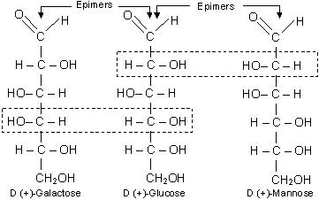 glucose is e...D Galactose Fischer Projection