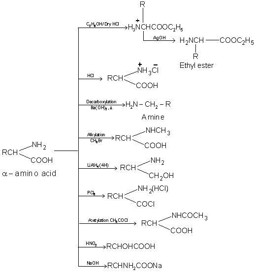 2357_Amino acid reaction.JPG