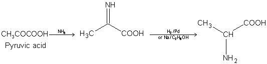 479_Pyruric acid.JPG